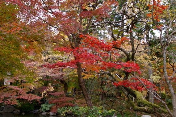 2009-11-19京都左京区 093.JPG