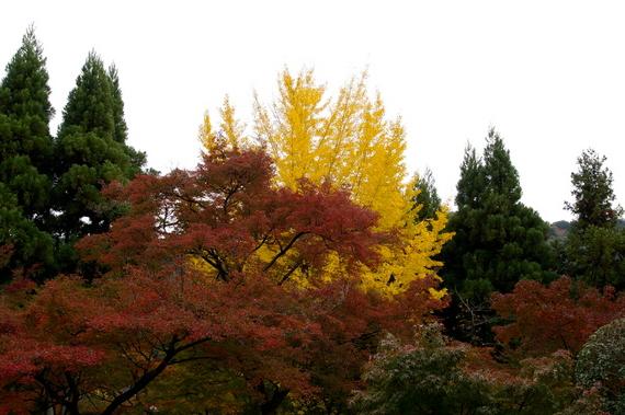 2009-11-19京都左京区 094.JPG