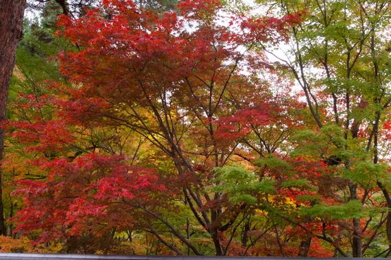 2009-11-19京都左京区 098.JPG