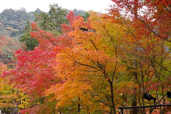 2009-11-19京都左京区 099.JPG